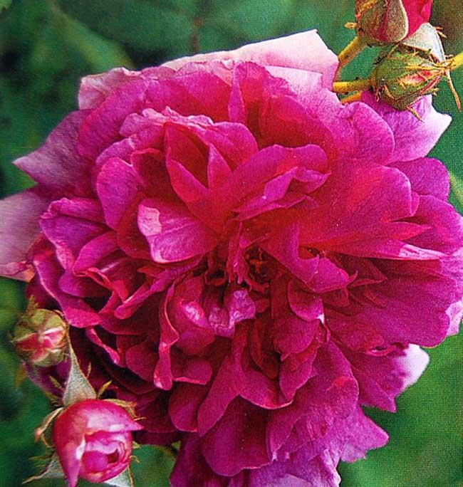 Gardenglory04