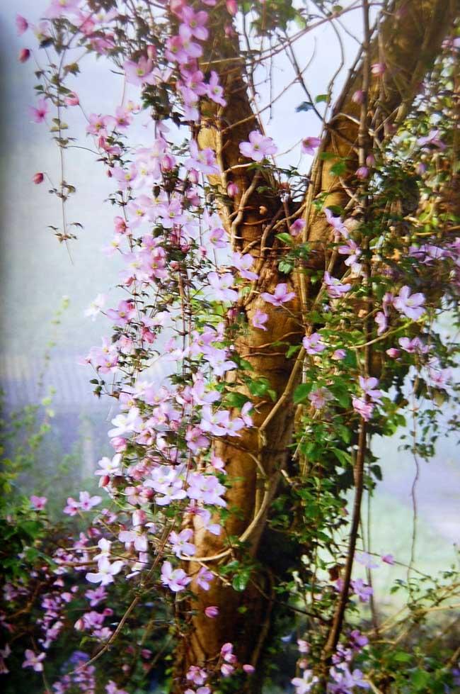 Beautifulblooms