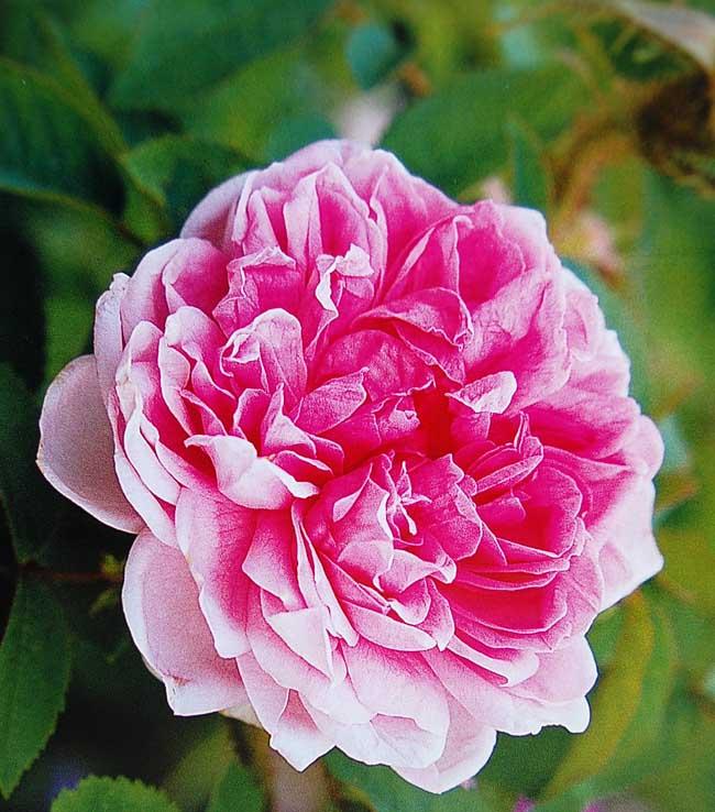 Gardenglory03