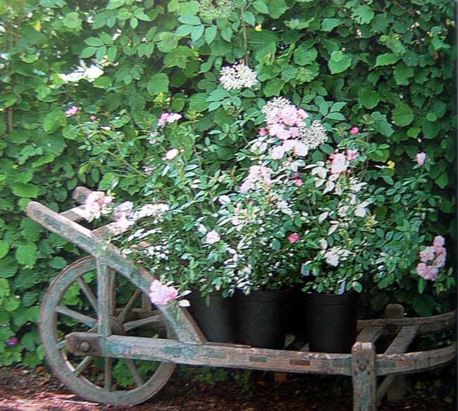 Gardenglory05